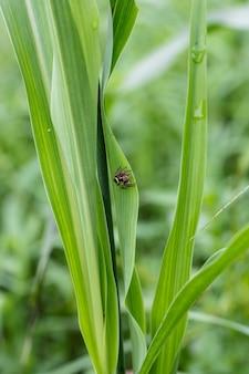 녹색 잎에 작은 거미가 배경을 닫습니다.