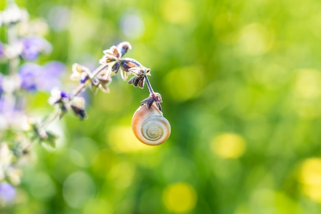 Small spiral snail hanging on a flower on blurred green grass background.
