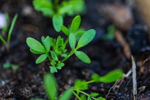 園芸農場の小さな春の芽。グリーンライフのコンセプト。生態学と環境の背景。
