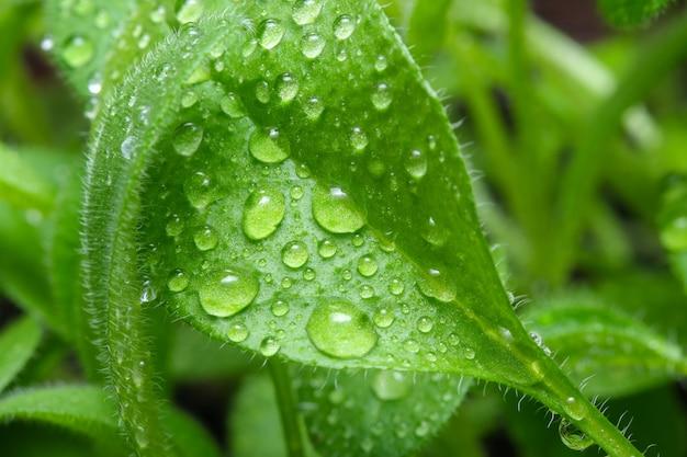 이탄 토양 근접 매크로 사진에 식물의 작은 콩나물