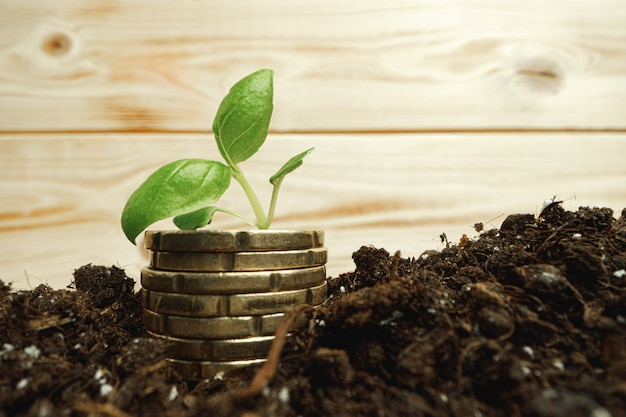 토양에 쌓인 동전에 작은 콩나물을 닫습니다.