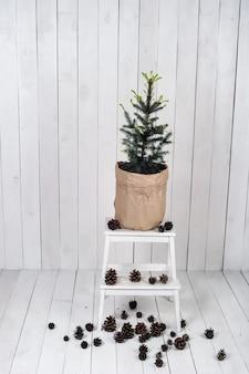 Маленькая ель без украшений в большом горшке, завернутом в крафт-бумагу, стоит на деревянной подставке