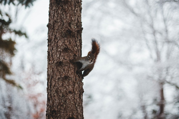 Small squirrel on tree trunk