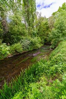 Small stream among lush green vegetation, tall trees and blue sky with clouds. rio duratãƒâ³n, segovia. spain.
