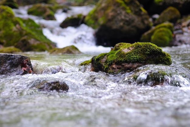 작은 개울은 폭포와 이끼 낀 돌을 둘러싸고 흐릅니다. 쓰러진 나무는 물 위에 놓여 있다
