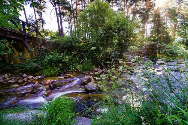 日の出の緑の森の小川と木々の間からの太陽光線。