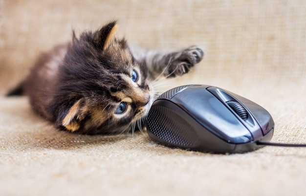 Small striped cat is played with a computer mouse. kitten lies near the mouse