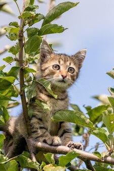 木の高いところにある小さな縞模様の子猫