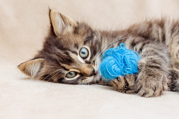 A small striped kitten is played with a blue threads