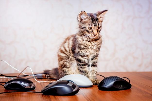 Маленький полосатый котенок возле компьютерной мыши.