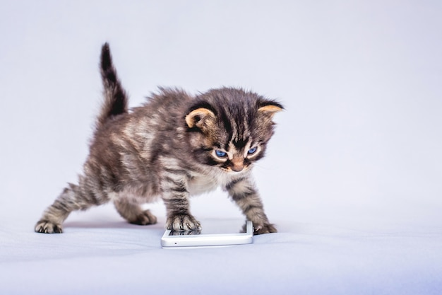 Small striped kitten near the phone. communication using a mobile phone