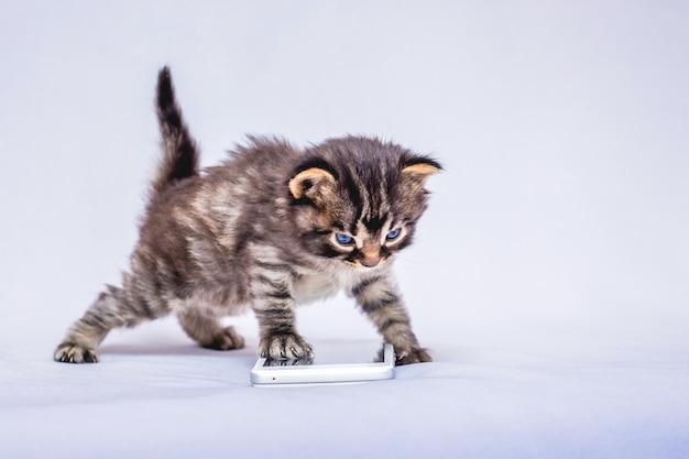 電話の近くの小さな縞模様の子猫。携帯電話を使ったコミュニケーション