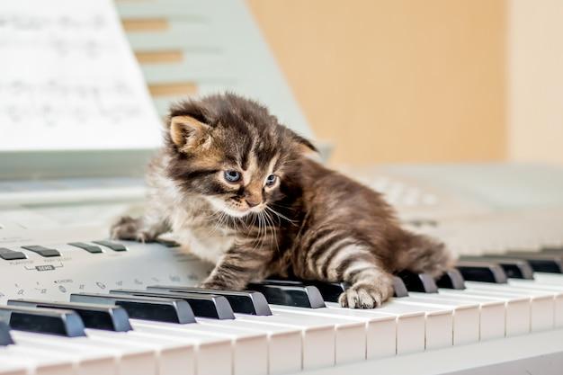 Маленький полосатый котенок на клавишах пианино