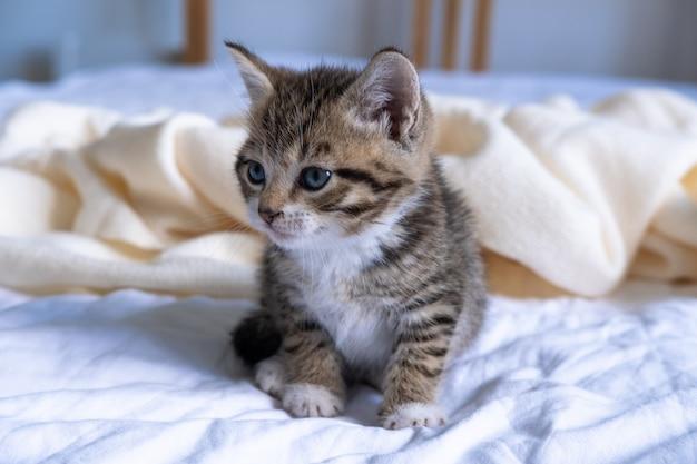 Small striped kitten sitting on bed white light blanket.