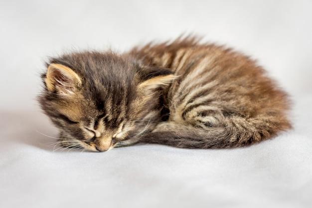 A small striped kitten sleeping on a white sheet