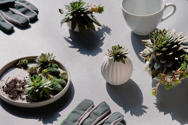 Маленькие суккуленты и садовые перчатки