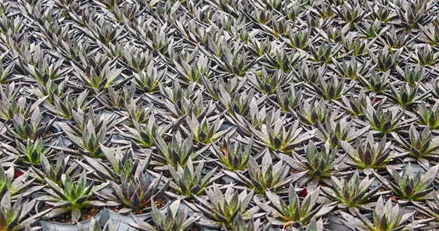 Small succulent plants background