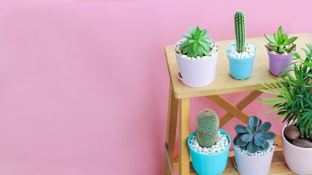 Small succulent plants in beautiful colored pots are standing on wooden shelves on a pink background.