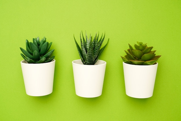 Small succulent plants on a green , minimal simple composition