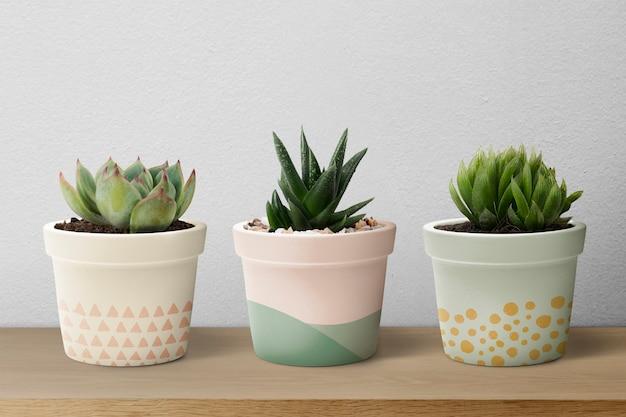 Small succulent plants in pastel pots