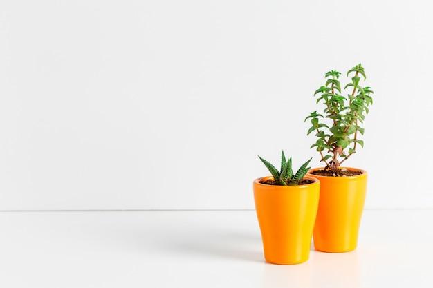 Small succulent plants in pots in home interior