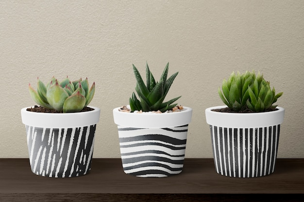 Small succulent plants in pots