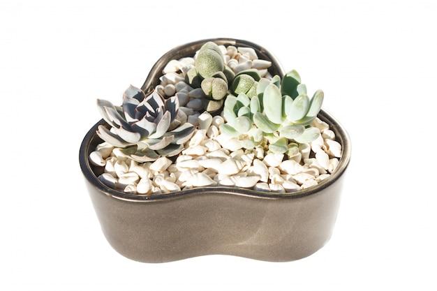 Small succulents in a ceramic pot