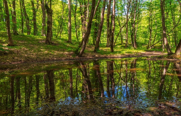 Small swamp in a green forest