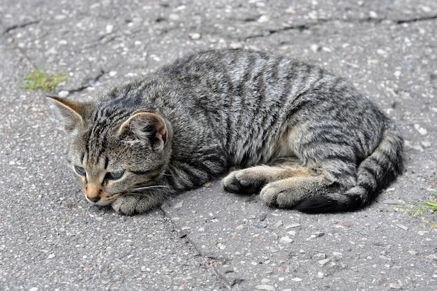 길거리에서 포장 도로에 누워 작은 줄무늬 고양이