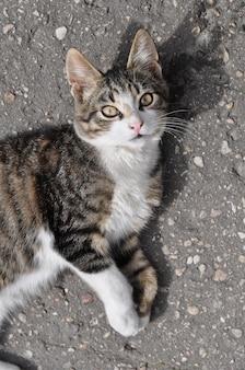 通りの舗装道路に横たわっている小さなぶち猫