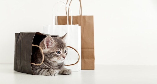 Small tabby kitten is hiding in paper bag. cat in delivery bag look side on space for text. shopping sale purchase concept. long web banner with copy space on white background.