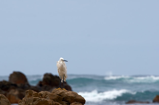 Small tired bird rests on the rocks of the sea coast without stopping