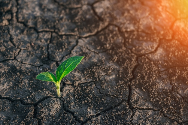 小さな木が舗装を突破植物の緑の芽が亀裂アスファルトを通り抜けるコンセプト不可能なことは何があっても諦めない健康医学化粧品