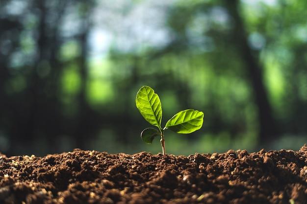 작은 나무 개념과 나무 심기 지상에 작은 나무