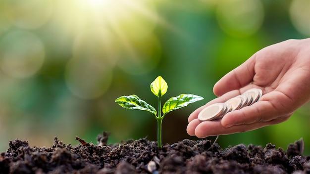 朝の光と手がぼやけた緑の自然の背景の木にコインを与える地面に成長している小さな木。