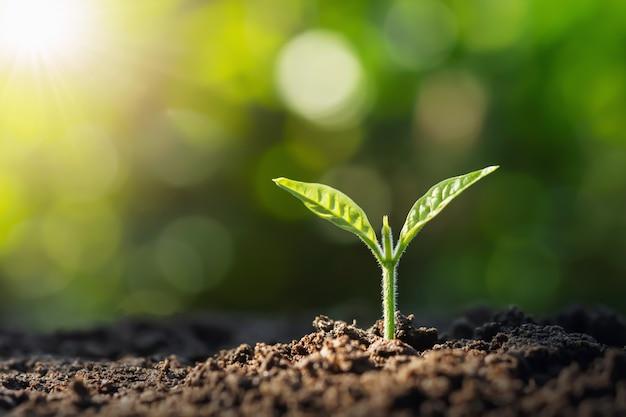 일출과 함께 성장하는 작은 나무. 녹색 세계와 지구의 날 개념 프리미엄 사진