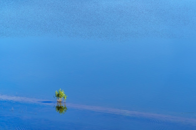 Small tree in the middle of a lake of blue water and reflections in the water.