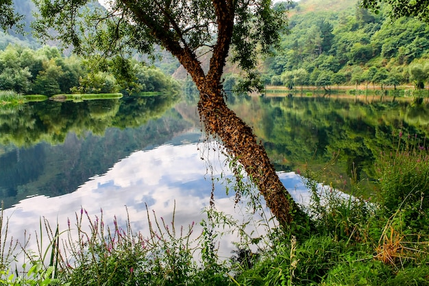 ツタと緑豊かな植生に囲まれた川の横にある小さな木。アストゥリアス。スペイン。