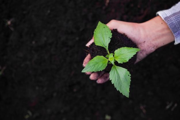 손에 토양에 작은 나무. 절약 환경