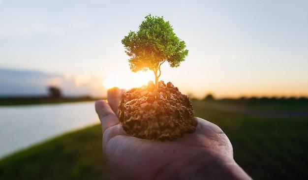 手持ちの土の上の小さな木と川岸の日の出、csrの概念