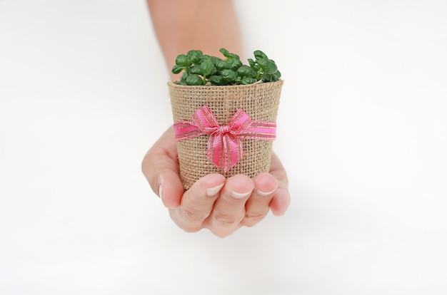 Small tree in a pot wrapped in burlap on woman hand against white background.