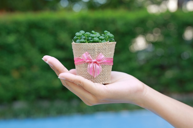 Small tree in a pot wrapped in burlap on woman hand