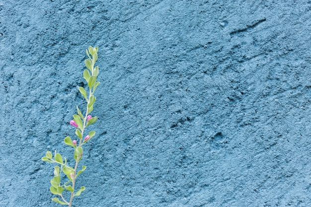 Small tree and purple on blue rough cement wall