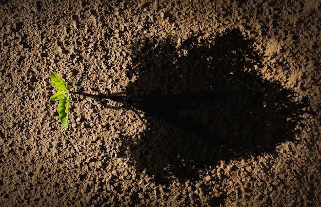 Маленькое дерево с большими тенями олицетворяет рост и рост бизнеса. спасите мир или концепцию дня земли