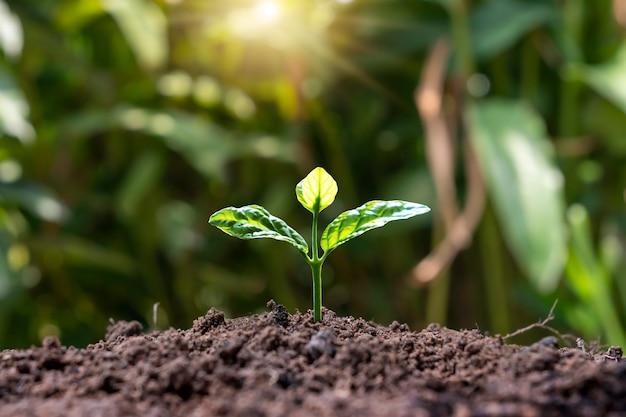 녹색 잎이 있는 작은 나무 농업과 지속 가능한 식물 성장의 자연 식물 성장 개념