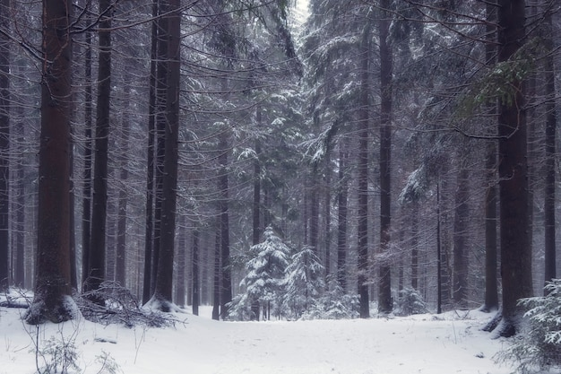 Small trees foggy winter forest in snow