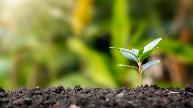 작은 나무는 자연적으로 자라며 양질의 나무 심기 및 지속 가능한 산림 복원의 개념입니다.