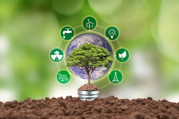 省エネランプとエネルギー関連のアイコンに成長する小さな木