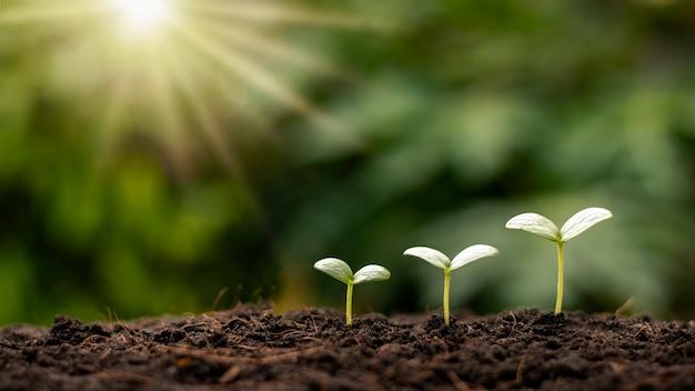 다양한 크기의 작은 나무가 자라며 환경과 세계 환경의 날을 돌보는 개념.