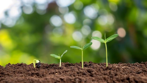 환경과 세계 환경의 날을 돌보는 녹색 배경 개념에서 자라는 다양한 크기의 작은 나무.